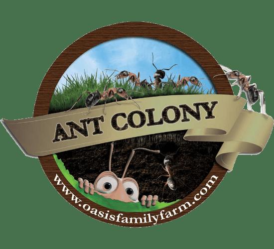 ant colony farm