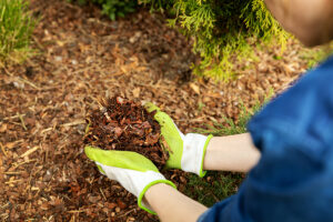 Bulk Mulch vs Bagged Mulch: Which is the Best for Your Garden?